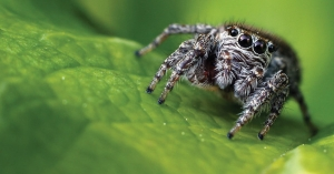 Is Spider Phobia Justified?