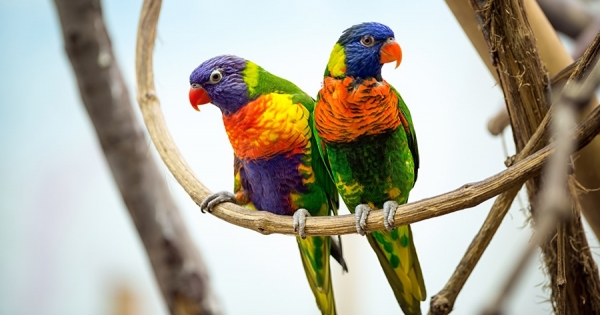 The Exotic Pet Checklist - check it out!
