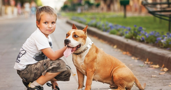 Child Safety and Animals